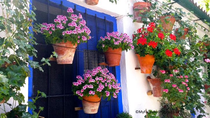 Flower power in the patio fiesta in Cordoba