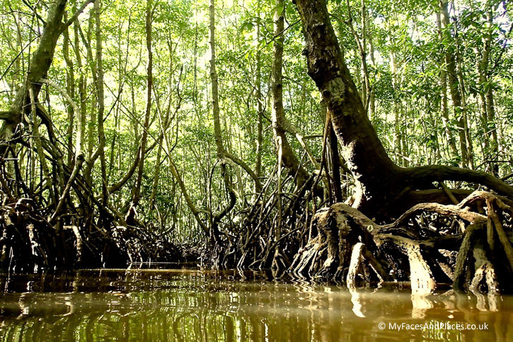 Gaya Island Resort - Entering the spooky mangrove forest on our kayak expedition